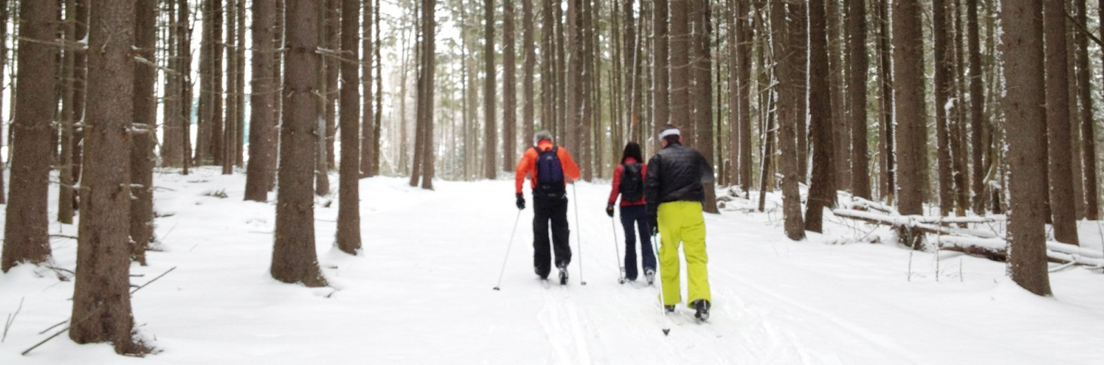 Three cross country skiers on trail with fresh snow in the woods.