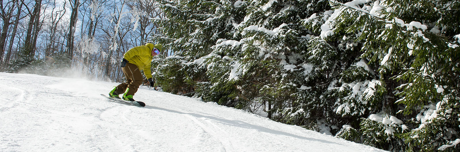 Snowboarder riding down slope by snowy trees