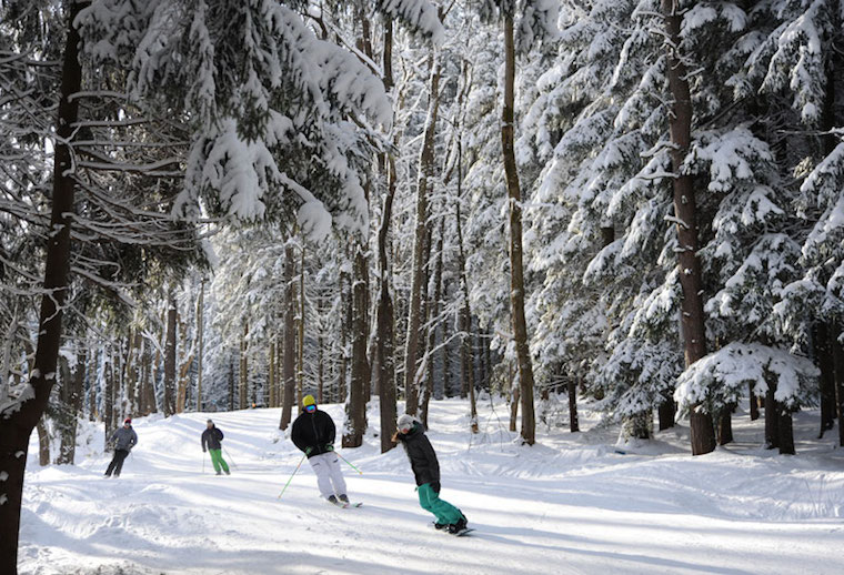 Skiers and snowboarders riding on ski trail through the woods with fresh snow